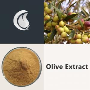 Olive Extract Powder