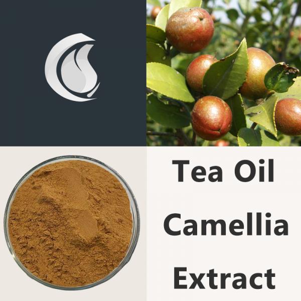 Tea Oil Camellia Extract Powder