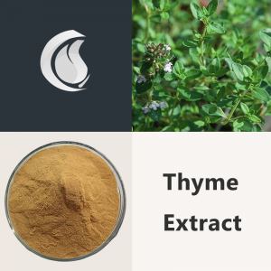 Thyme Extract Powder
